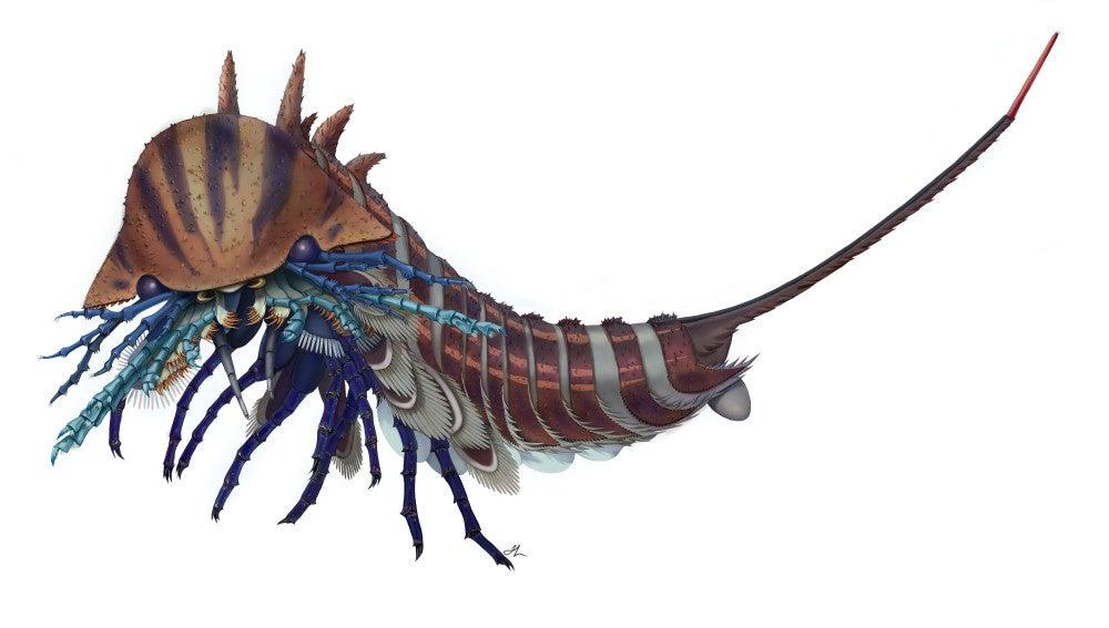 Un feroz depredador marino con cabeza de navaja vivio hace 508 millones de anos