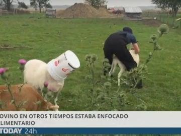 Imagen del vídeo de 'El Mundo Today' sobre ovejas y pastores
