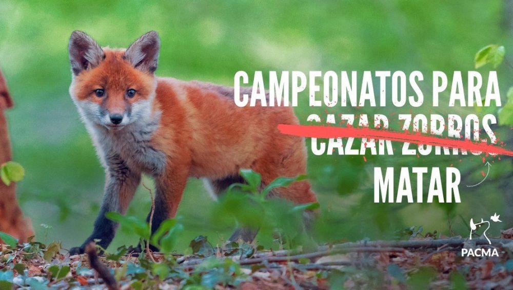 Campaña contra la caza del zorro de Pacma