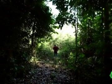 """Una investigación de Greenpeace relaciona la tala ilegal del Amazonas con la 'matanza de Colniza': """"Asesinaban a los que estaban cerca de la concesión maderera"""""""