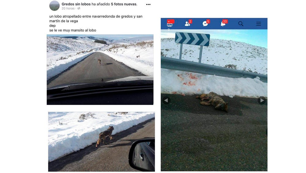 Imagen del Facebook cerrado en la que presumían de haber matado a un lobo