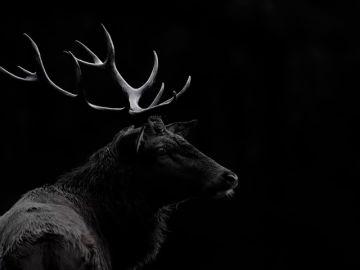 La 'enfermedad del ciervo zombie' podría extenderse a humanos
