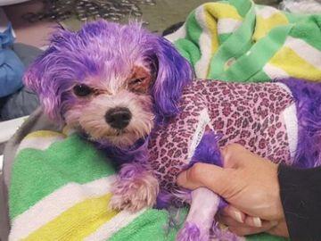 Violeta con el tinte en el pelo