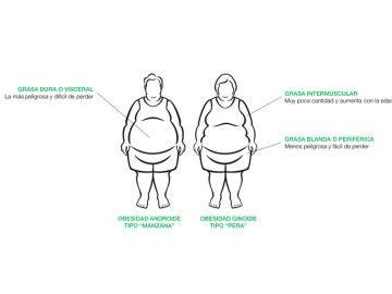 La grasa del cuerpo