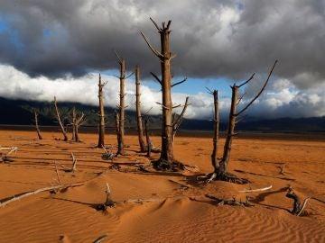 Imagen de árboles secos en Sudáfrica