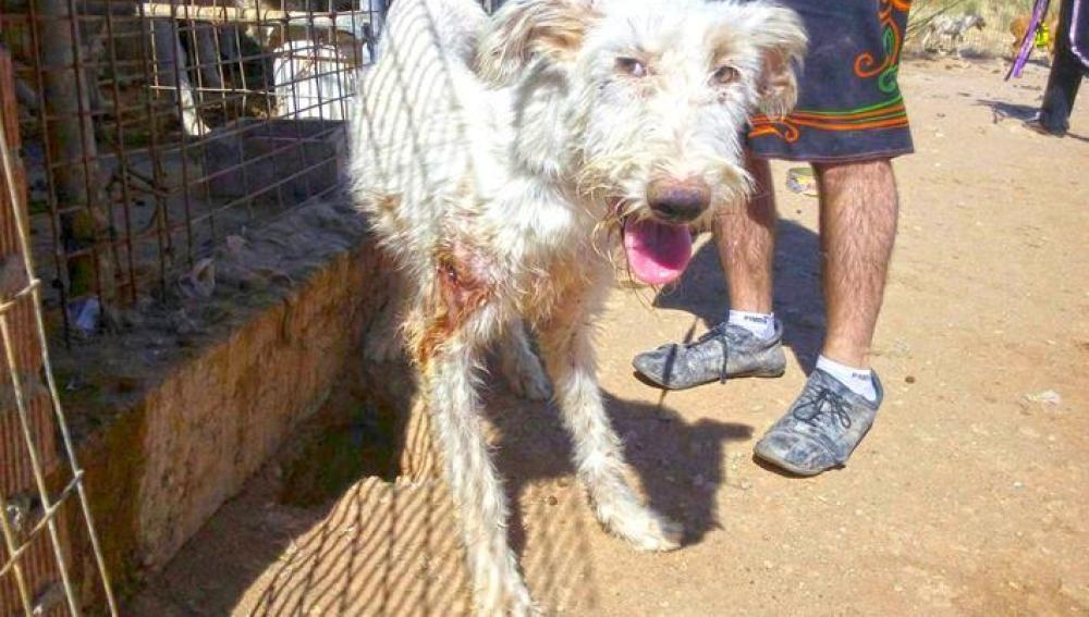 Un perro maltratado por un cazador