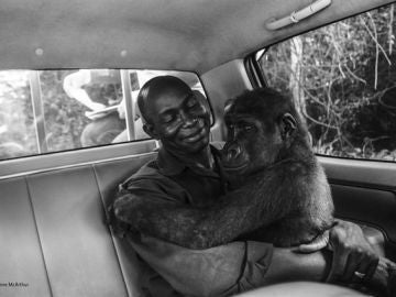 El rescate de la gorila Pikin