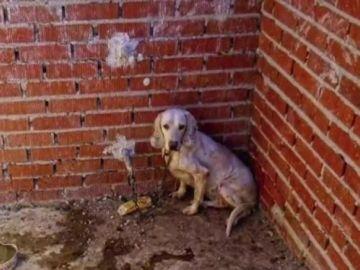 Imagen de un perro maltratado