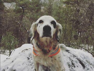 Pete, el perro que se ha convertido en todo un héroe
