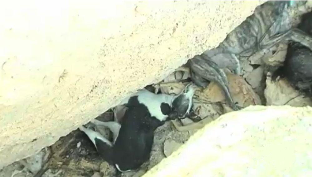 Fosa común con 30 perros en Cuenca