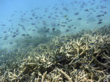 Peces tropicales nadan entre la Gran Barrera de coral en la isla de Keppel