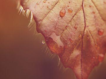 Más allá de la lluvia dorada, existen más deseos
