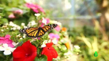 Las mariposas del zoo de San Diego revolotean libres junto a los visitantes