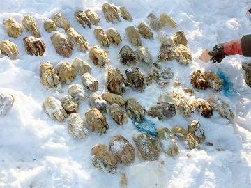 Hallan decenas de manos en Siberia