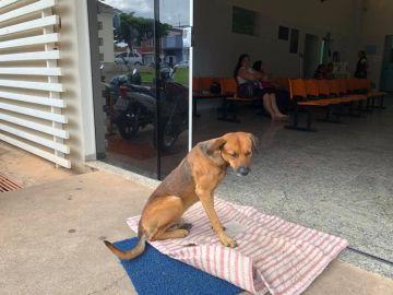 El perro lleva meses esperando a su dueño en el hospital