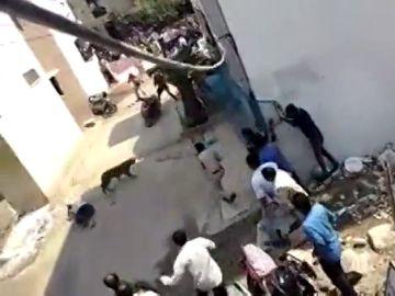 Un leopardo salvaje siembra el caos y el terror en una ciudad de la India