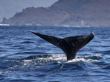 Foto de archivo de una ballena