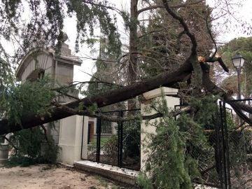 Vista del lugar en el que un niño de 4 años ha muerto tras caerle un árbol encima