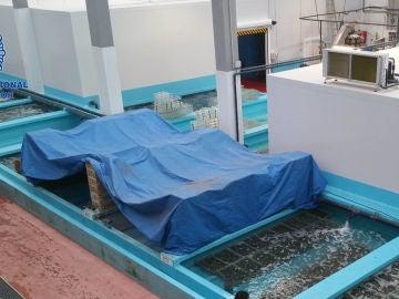 Inmovilizadas 10 toneladas almejas japónicas introducidas ilegalmente España