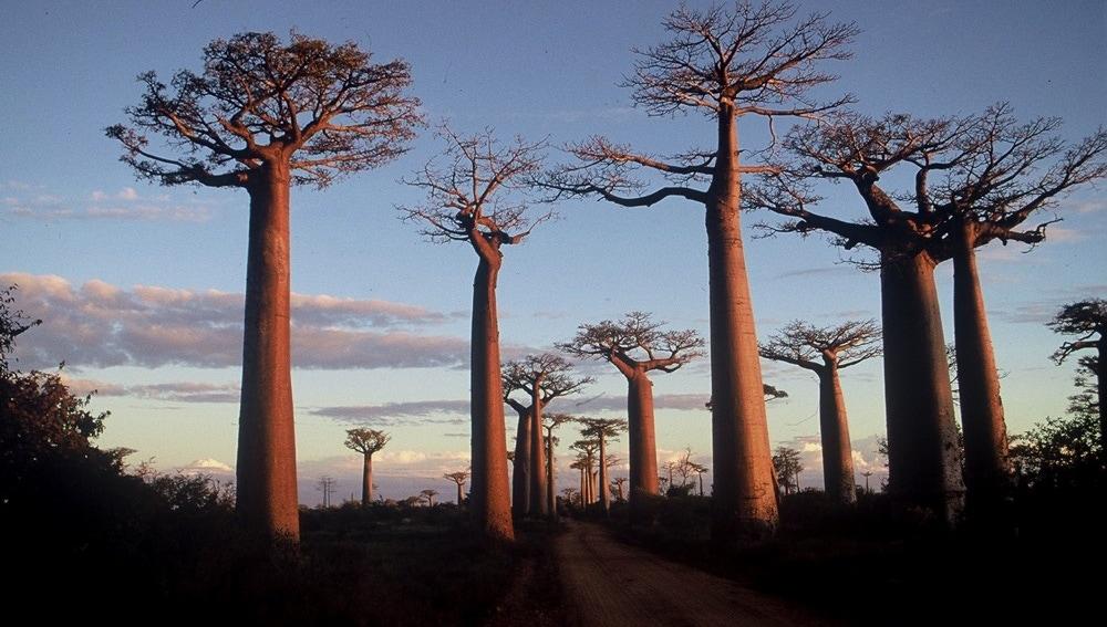 La verdadera Madagascar