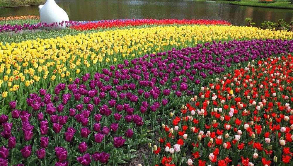 Destinos florales