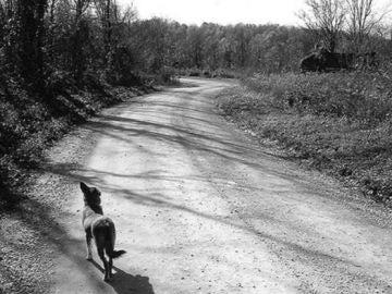 Imagen de archivo de un perro abandonado en una carretera