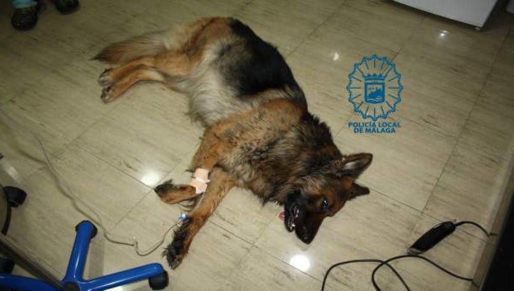 El perro que fue intervenido