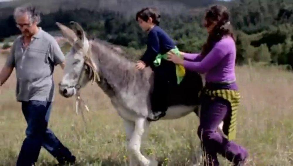 El burro, en peligro de extinción: repaso a un animal con un futuro que pasa por la 'asnoterapia'