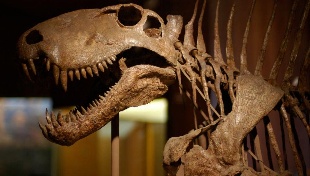 El 'boom' de las pujas por huesos de dinosaurios se produco a finales de los 90