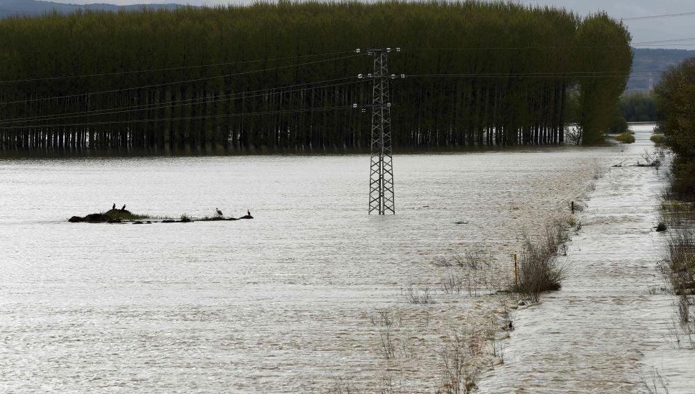 Lugar cercano a la localidad de Castejón donde se han roto los diques que se encontraban en el margen de rio