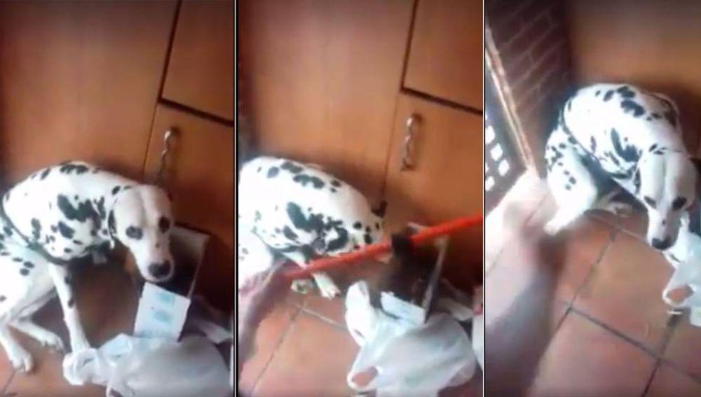 Imagen del vídeo grabado del maltrato al dálmata en Vitoria