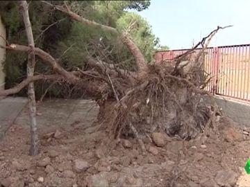 árbol caído por las fuertes rachas de viento en Elche
