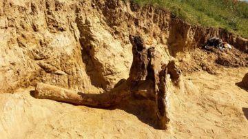 Restos de un mastodonte del Mioceno