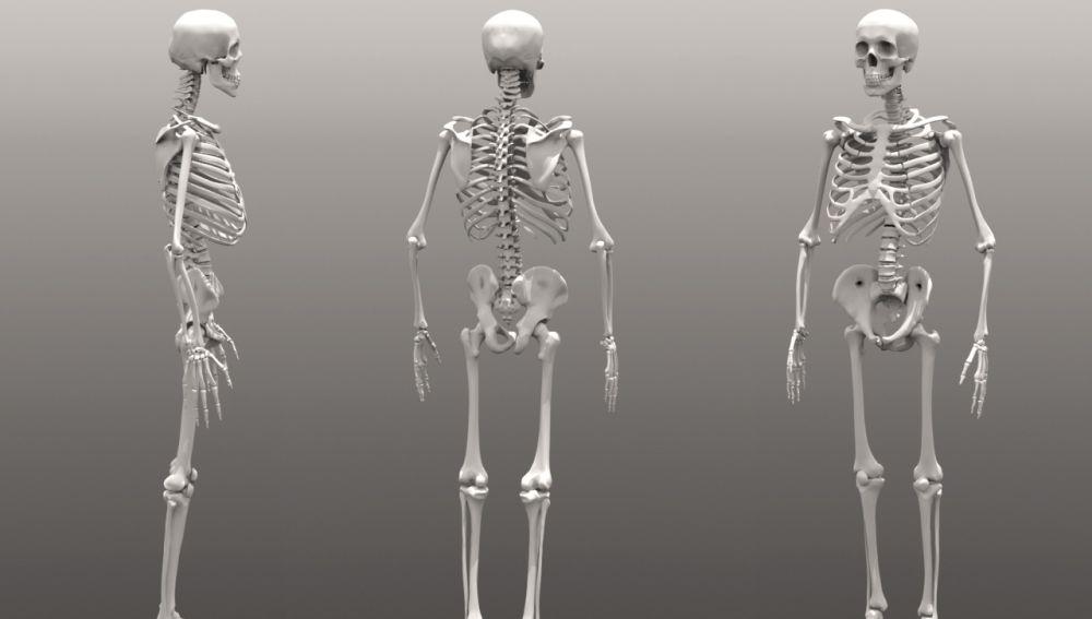 Imagen de varios esqueletos humanos
