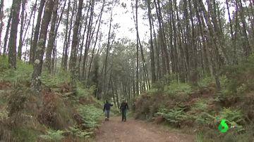 Forestales limpiando un bosque en Galicía