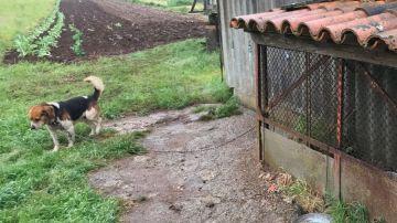 Imagen de archivo de un perro atado