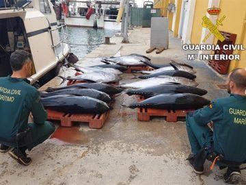 Incautación de atún rojo