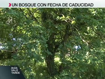 Bosque en Vigo