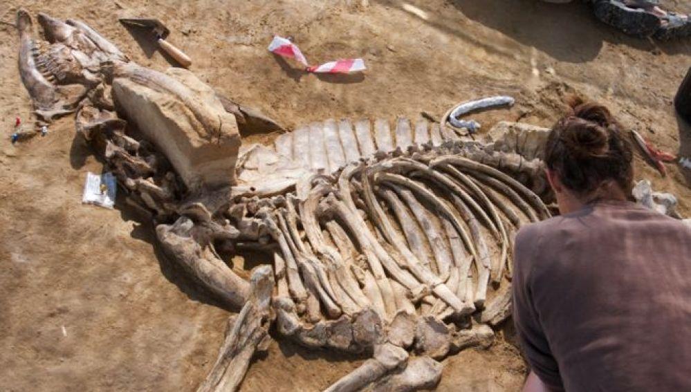 Restos encontrados en el yacimiento arqueológico de Camp dels Ninots