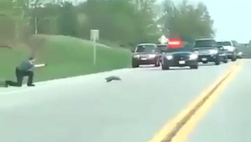 Policía mata a una marmota en EEUU