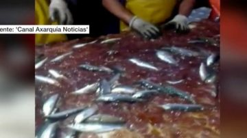 Medusas entre las capturas de pescadores de Málga