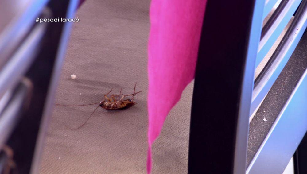 Una cucaracha en Pesadilla en la cocina: El Racó Maritim