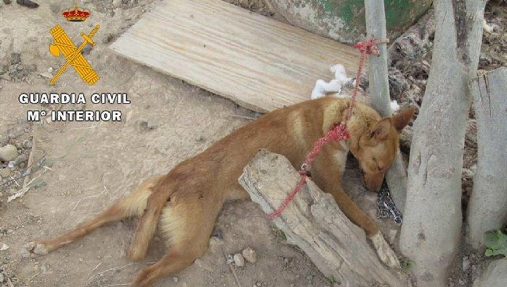 Uno de los perros que se encontraba en condiciones precarias en Granada