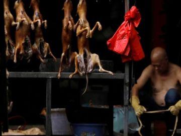 El festival del perro de Yulin