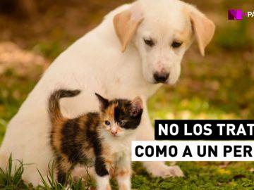 Año 2017: otros 104.000 perros y 33.000 gatos abandonados en España