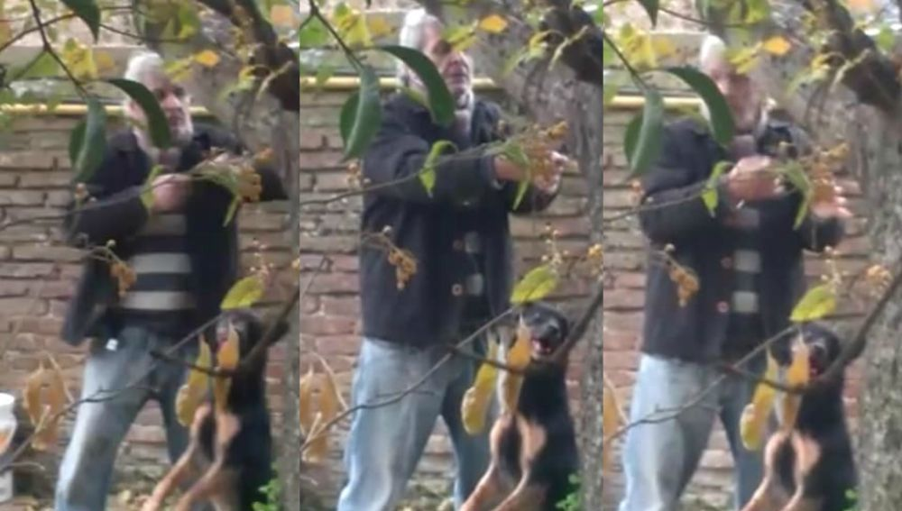Un hombre ahorcando a su perro.