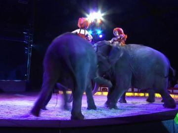 Elefante embiste a otro elefante