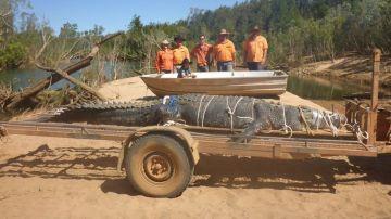 Capturan un cocodrilo de 600 kilos al norte de Australia
