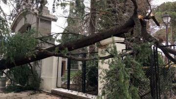 Lugar en el que un niño de cuatro años murió tras caerle un árbol encima en el parque del Retiro, en Madrid