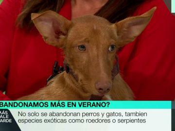 Un perro en Más Vale Tarde.